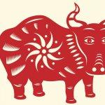 Chinese Horoscoop Os: Unieke Eigenschappen, Liefdesleven + Tips